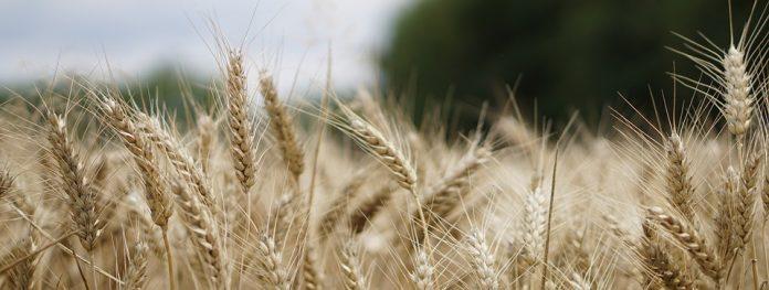 Stranice za upoznavanje poljoprivrednika u SAD-u